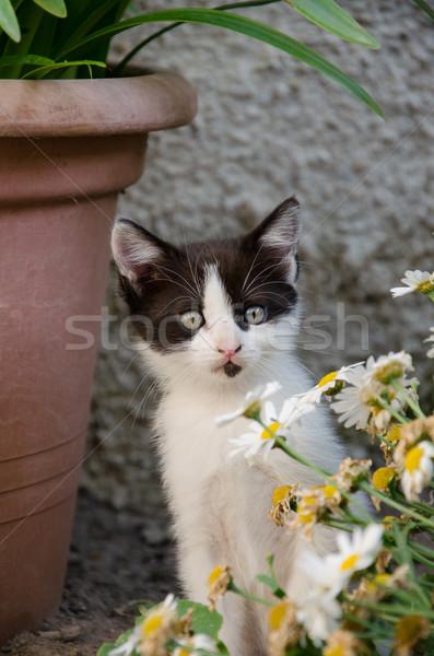 ребенка котенка животного ПЭТ Сток-фото © Dserra1