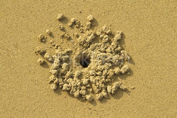 Yengeç delik kum soyut doğa top Stok fotoğraf © duoduo