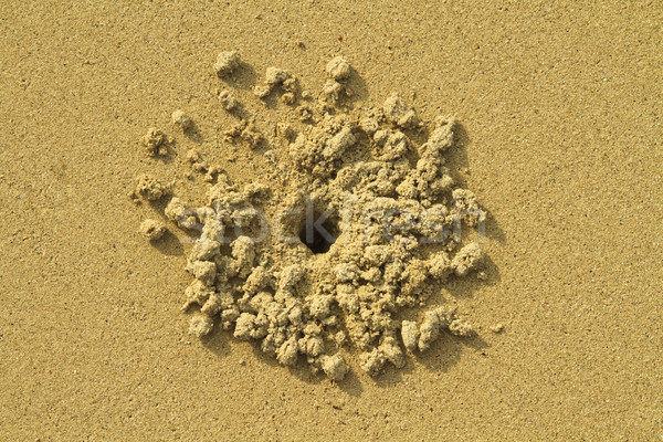 Stockfoto: Krab · gat · zand · abstract · natuur · bal