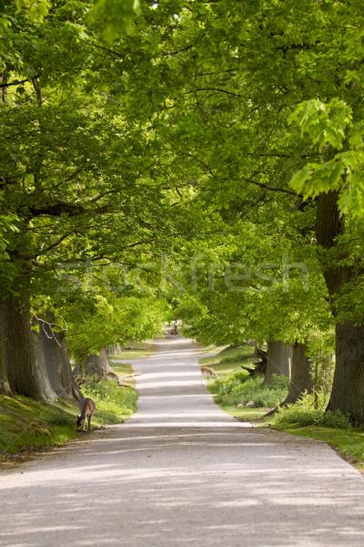 Geyik park İngiltere ağaçlar ağaç ahşap Stok fotoğraf © duoduo