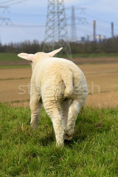 小さな 子羊 気候変動 後ろ 発電所 ビジネス ストックフォト © duoduo