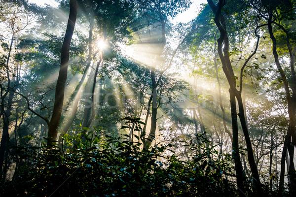 Sunrays passing through trees Stock photo © dutourdumonde