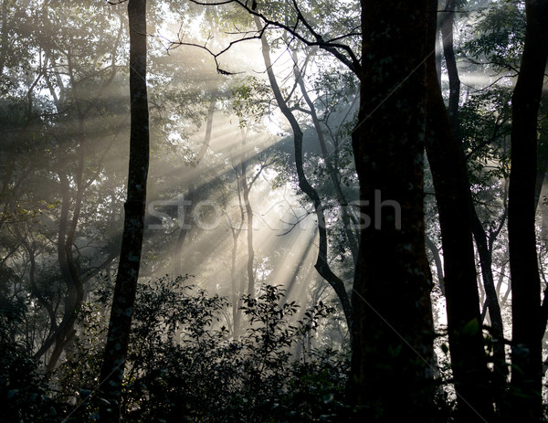 Sunrays passing through trees Stock photo © dutourdumonde