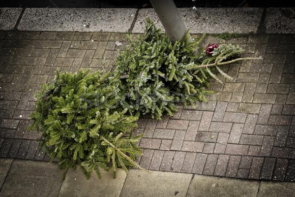 Twee christmas bomen trottoir wachten vuilnis Stockfoto © dutourdumonde