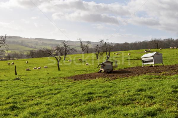 British landscape in winter Stock photo © dutourdumonde