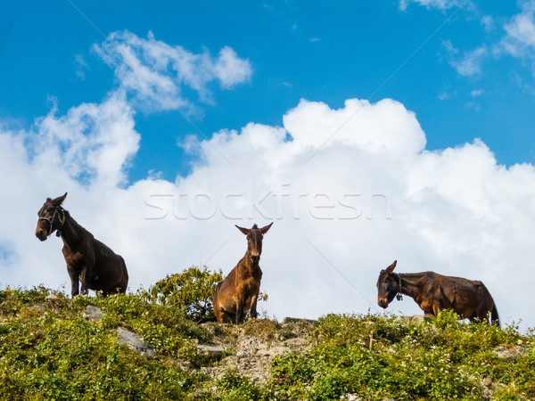 Drie top heuvel skyline ezel landbouw Stockfoto © dutourdumonde