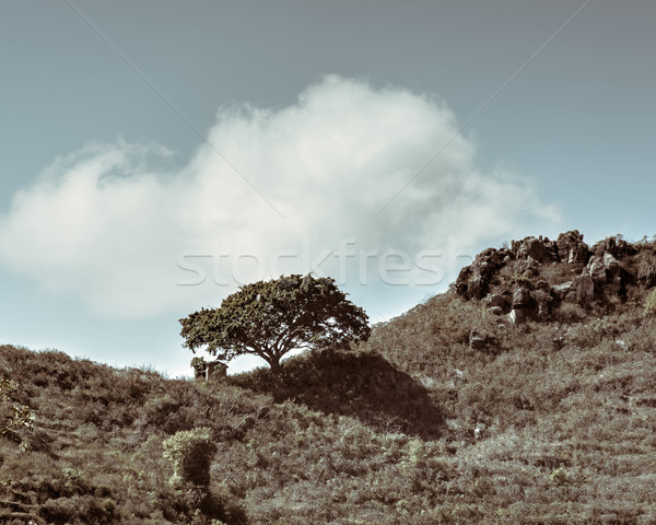 Single tree and shed Stock photo © dutourdumonde