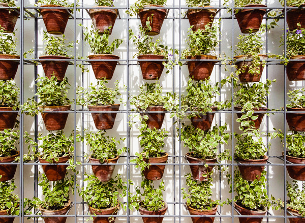 Plants in flower pots Stock photo © dutourdumonde