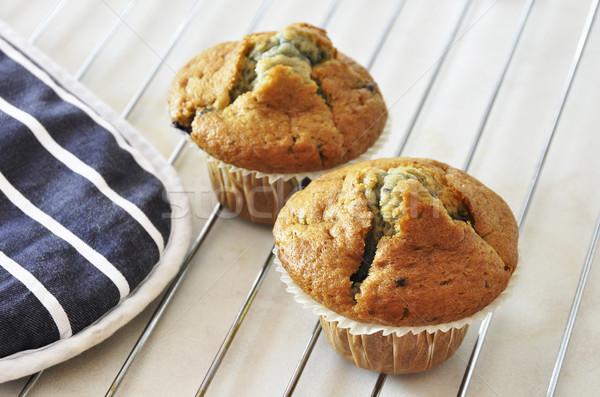 Kettő áfonya muffinok frissen sült papír Stock fotó © dutourdumonde