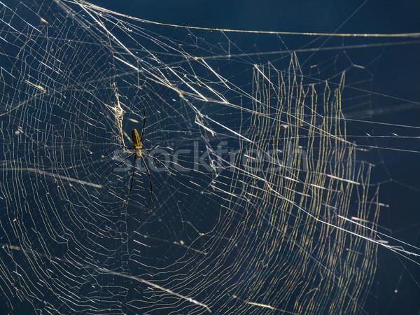 Spider Stock photo © dutourdumonde