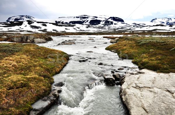 A torrent in Norway Stock photo © dutourdumonde