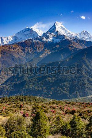 南 ネパール 咲く フォアグラウンド 風景 旅行 ストックフォト © dutourdumonde