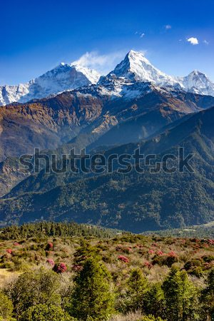 Sur Nepal florecer primer plano paisaje viaje Foto stock © dutourdumonde