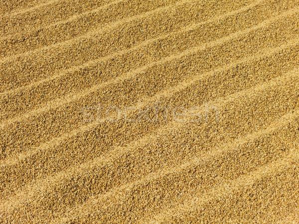 Rice drying in the sun Stock photo © dutourdumonde