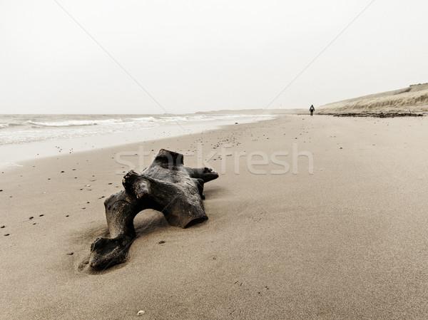 Driftwood plaży spaceru Szkocji wody Zdjęcia stock © dutourdumonde