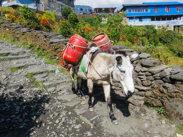 Donkey carrying two gas cylinders Stock photo © dutourdumonde