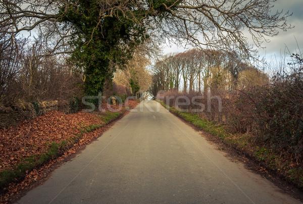 Road in rural Britain Stock photo © dutourdumonde