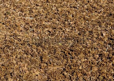 Millet drying Stock photo © dutourdumonde