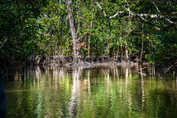 Indonesien Insel Baum Wald Blatt grünen Stock foto © dutourdumonde