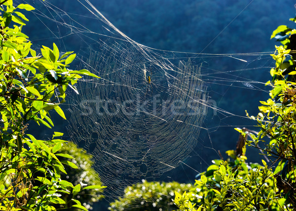 Golden orb weaver spider on its web Stock photo © dutourdumonde