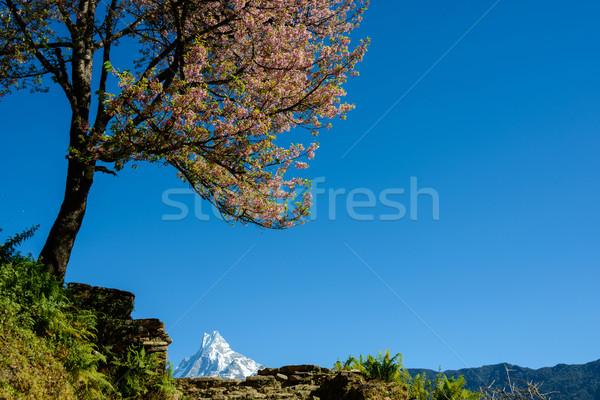 Непал розовый дерево природы пейзаж Сток-фото © dutourdumonde