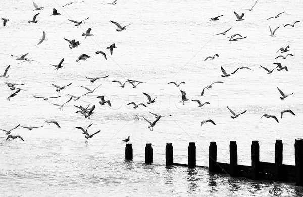 Seagulls flying Stock photo © dutourdumonde