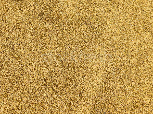 Rijst zon Nepal voedsel abstract Stockfoto © dutourdumonde