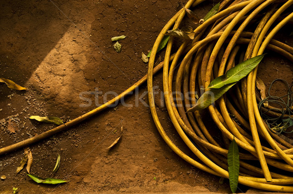 A yellow garden hose Stock photo © dutourdumonde