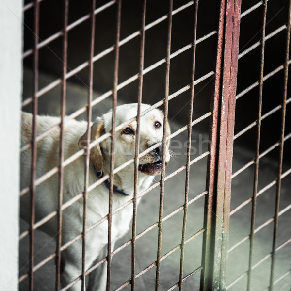 Dog locked in a cage Stock photo © dutourdumonde