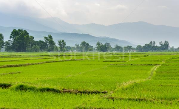 Pirinç alanları Nepal vadi çim manzara Stok fotoğraf © dutourdumonde