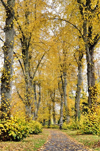 путь осень парка вертикальный выстрел Сток-фото © dutourdumonde