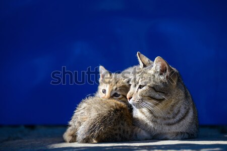 Cat basking in the sun Stock photo © dutourdumonde