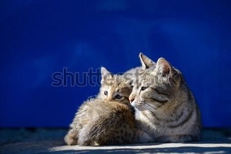 Cat basking in the sun Stock photo © dutourdumonde