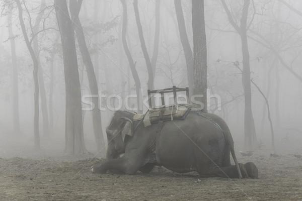 Háziasított elefánt fekszik ködös reggel erdő Stock fotó © dutourdumonde