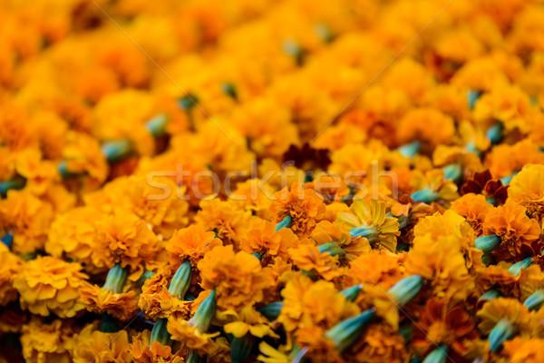 Shot bloem natuur reizen kleur Stockfoto © dutourdumonde