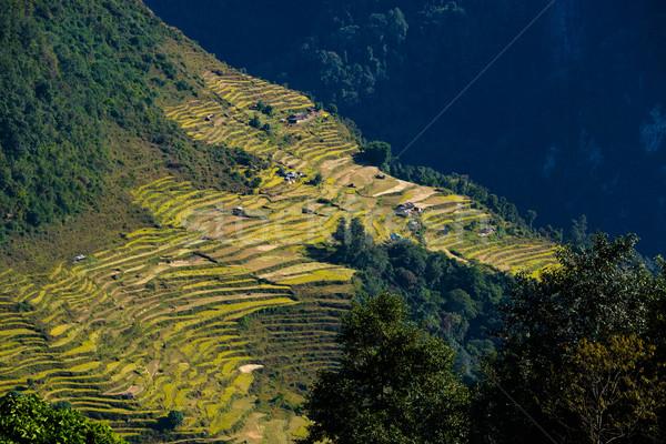 Nepalese landscape Stock photo © dutourdumonde