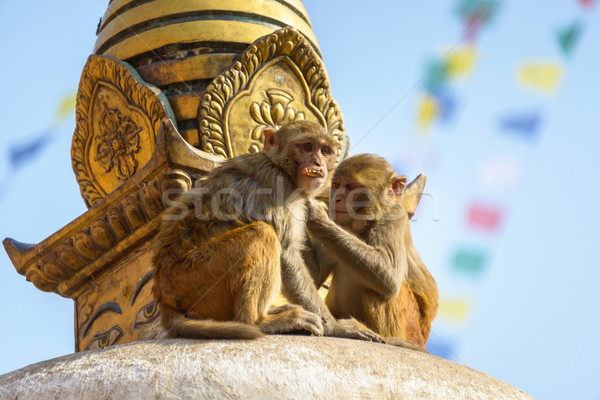 Two macaques on top of chorten Stock photo © dutourdumonde