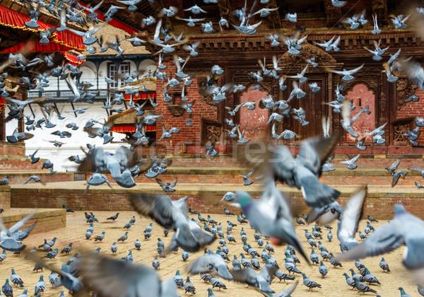 オフ 広場 ネパール 鳥 緑 ストックフォト © dutourdumonde