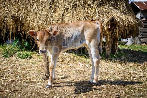 Adjunto polo verano granja jóvenes agricultura Foto stock © dutourdumonde