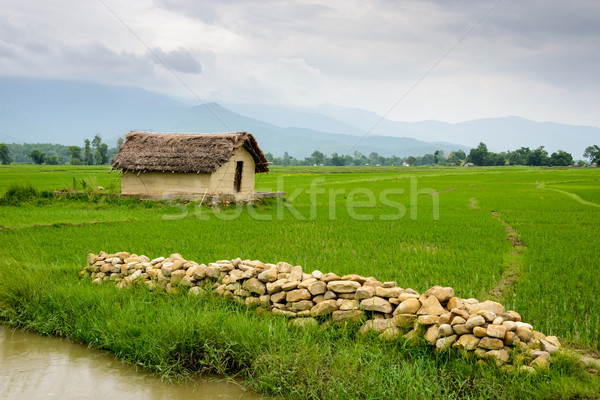 небольшой дома риса полях Непал долины Сток-фото © dutourdumonde
