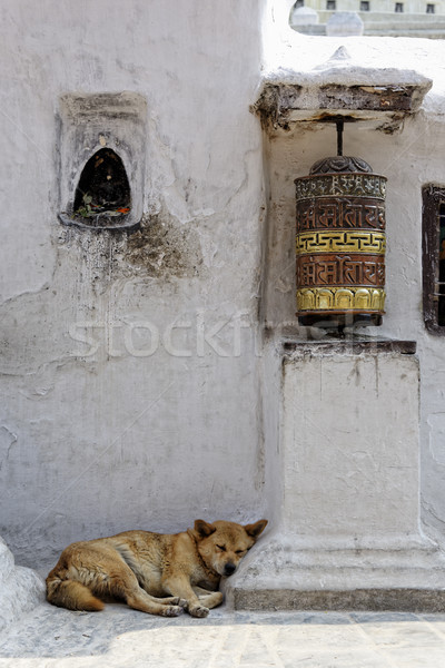 Prayer wheel and dog sleeping at Bothnath stupa in Kathmandu Stock photo © dutourdumonde