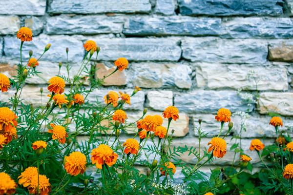 石の壁 ネパール 建物 壁 背景 石 ストックフォト © dutourdumonde