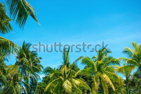 Palm trees and blue sky Stock photo © dutourdumonde