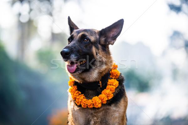 Kukur Tihar (dog festival) in Kathmandu, Nepal Stock photo © dutourdumonde