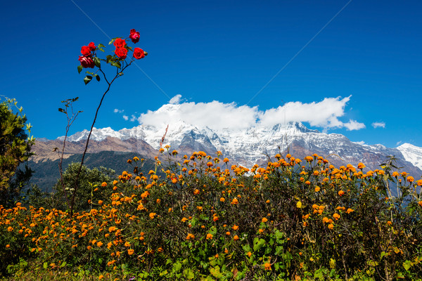 The Annapurna South and the Hiunchuli Stock photo © dutourdumonde