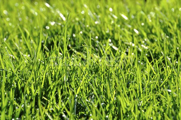 çiy çim bahar sabah doğa yaprak Stok fotoğraf © dutourdumonde