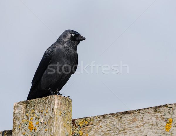ворон забор птица синий Skyline Сток-фото © dutourdumonde