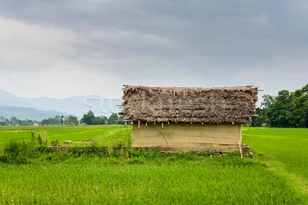 Foto stock: Pequeño · casa · arroz · campos · Nepal · valle