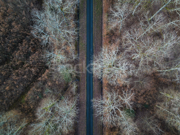 Aerial view of forest road Stock photo © dutourdumonde