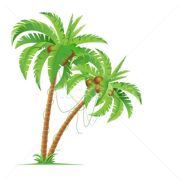 Palmera dos palmeras ilustración diseno blanco Foto stock © dvarg